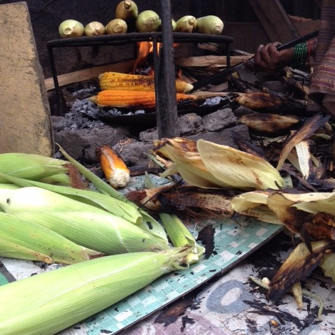 Amaize-ing Maize